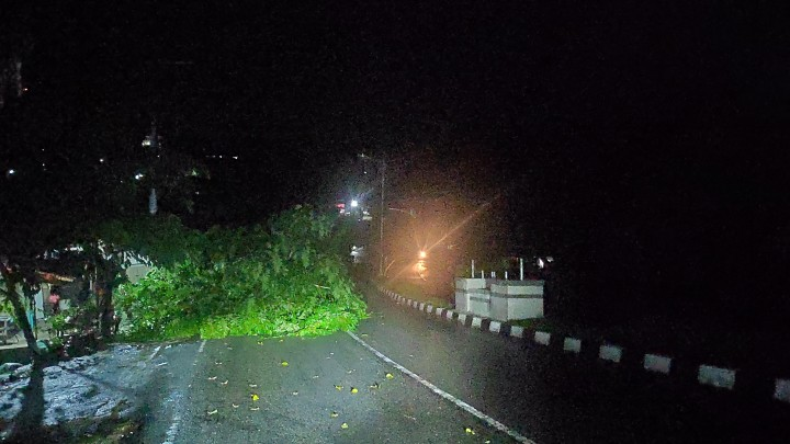 Hati-Hati !  Pohon Tumbang di Penurunan, Tutup Sebagian Jalanan