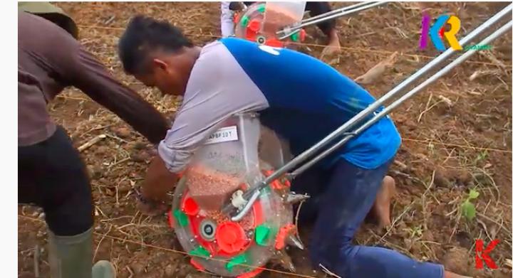 Ketika Para Pemuda Muara Jawa Menjadi Petani Jagung
