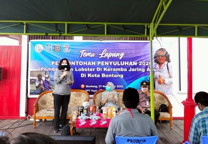 Cocok Dibudidayakan di Bontang, Keuntungan Bisnis Lobster Menggiurkan