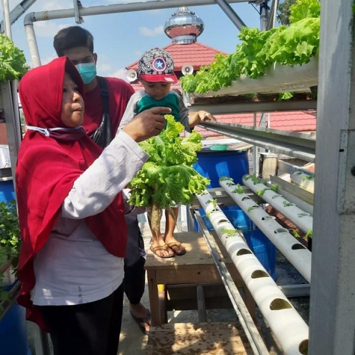 Kisah Sukses Sari, Bercocok Tanam di Halaman Rumah Raup Omzet Jutaan